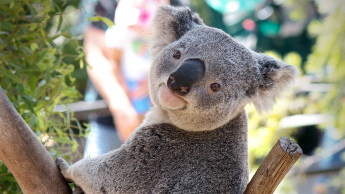 Like, how come there aren't many koala types in corporate America?